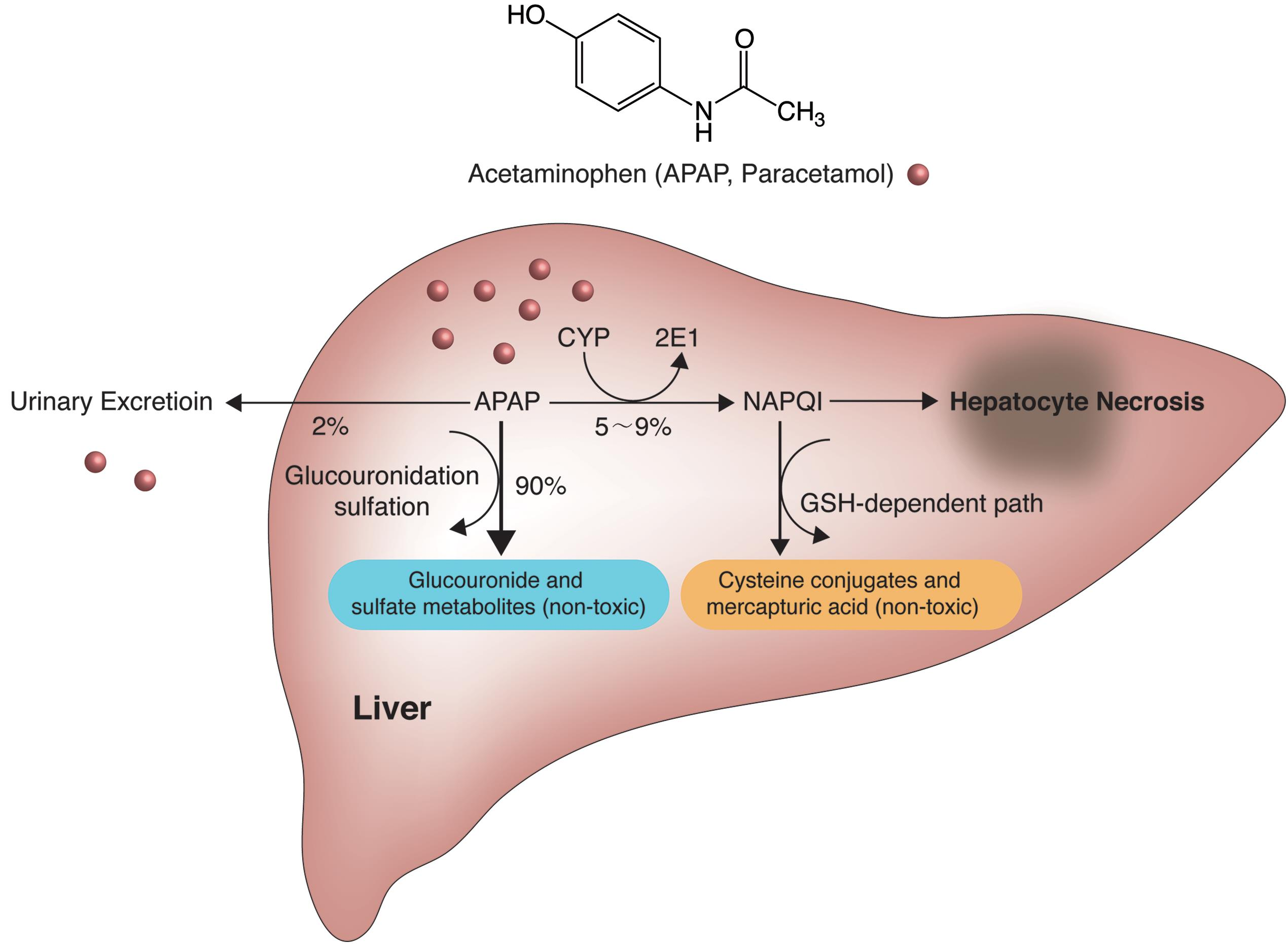 News Update on Hepatotoxicity Research: Aug – 2019