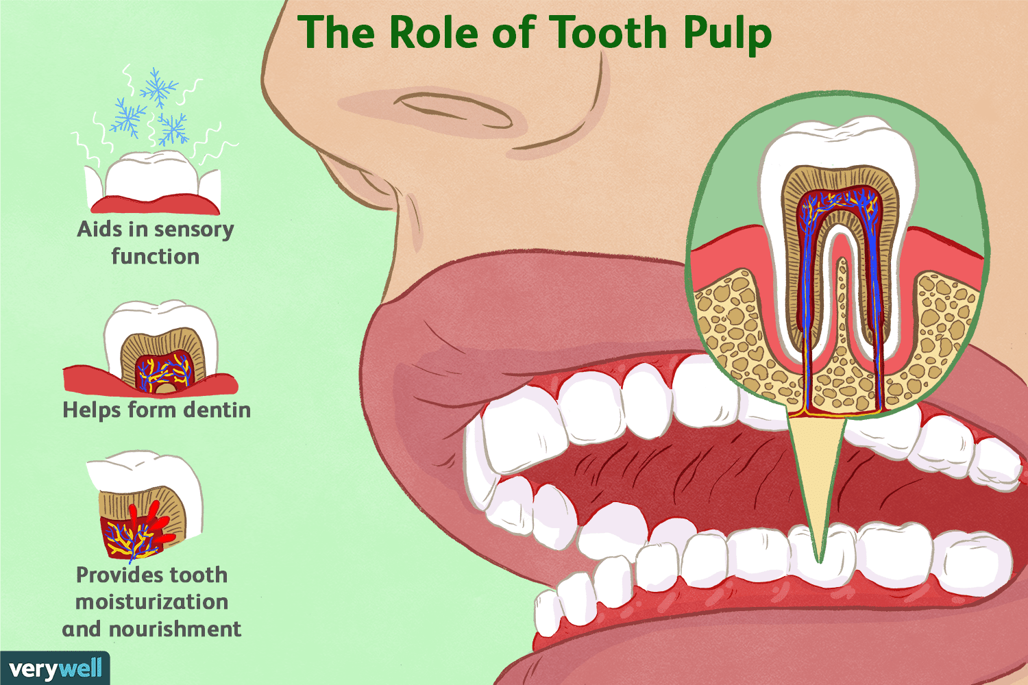 News Update on Dental Pulp Research: Sep – 2019