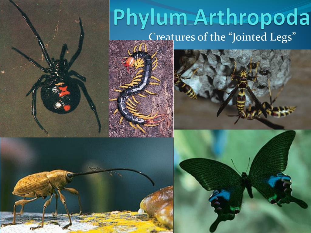 Latest News on Arthropoda Research: Dec – 2019