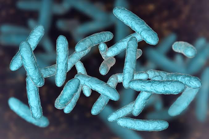Latest News on Lactobacillus Research: Dec – 2019