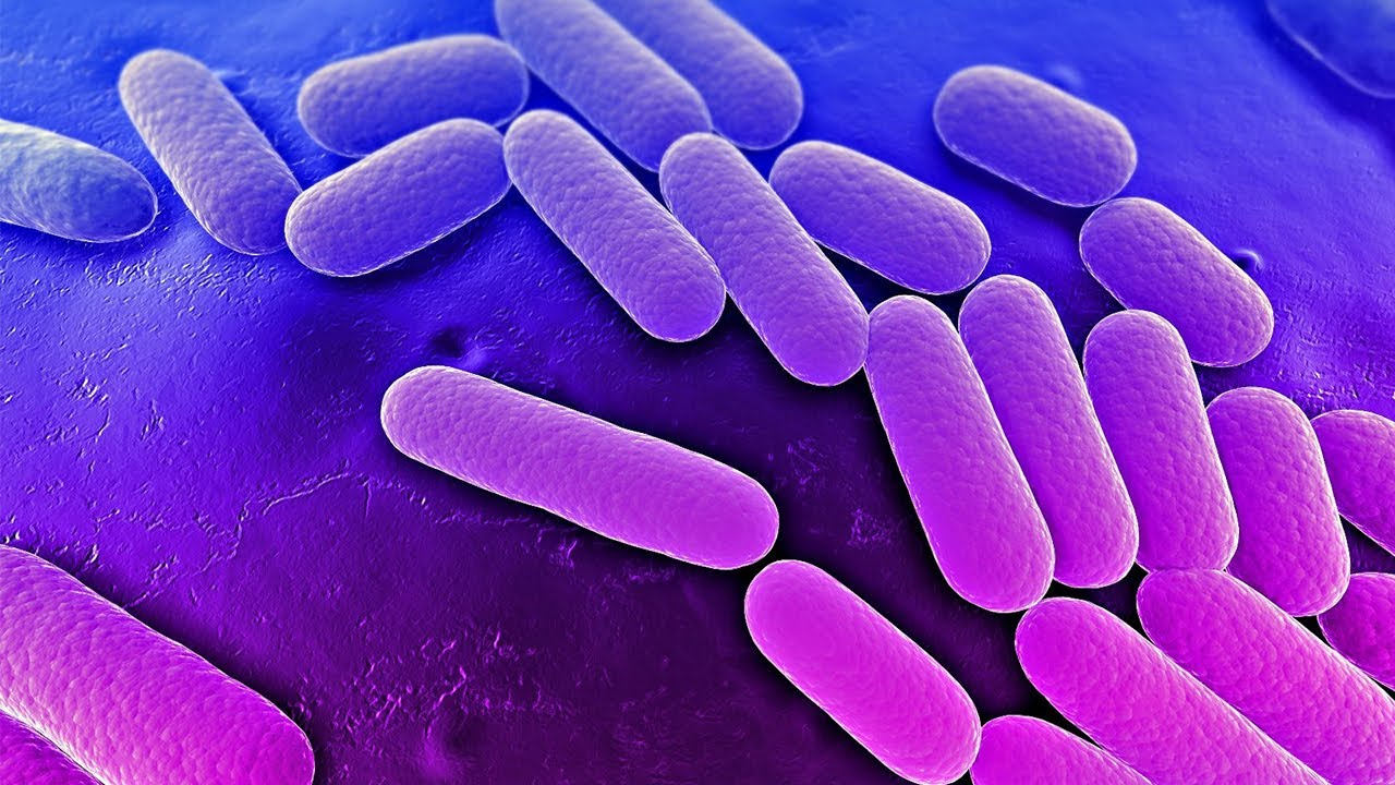 Latest Research News on Soil Bacteria: Dec – 2019