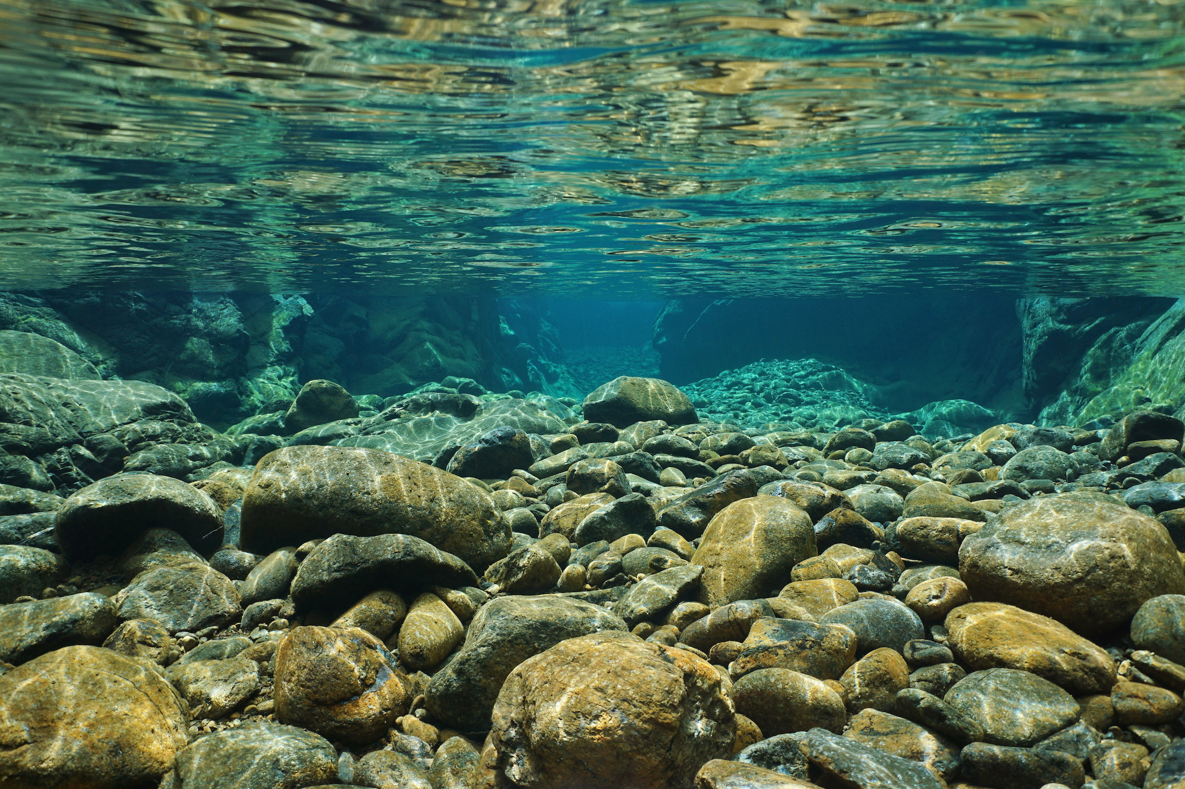 Latest Research on Freshwater Ecosystem: Jan – 2020