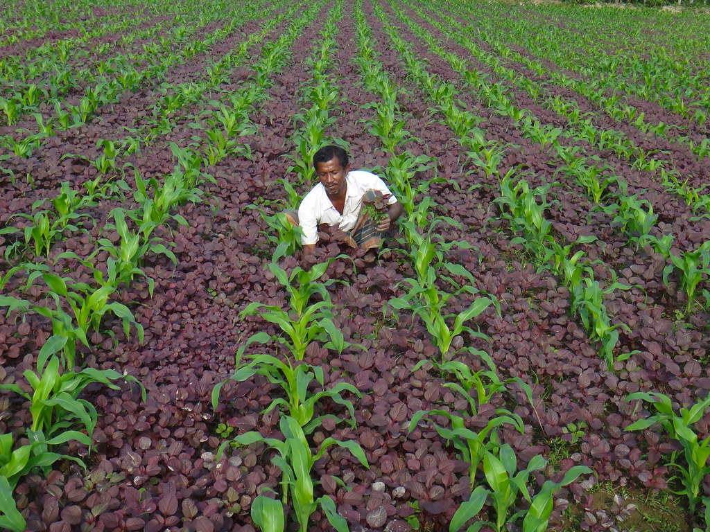 Latest Research on Intercropping: Feb – 2020